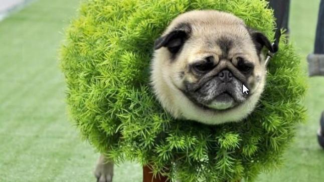 """""""Helga, the Chia Pet Pug"""" Dog Costume"""