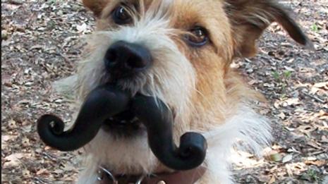 Doggie Mustache