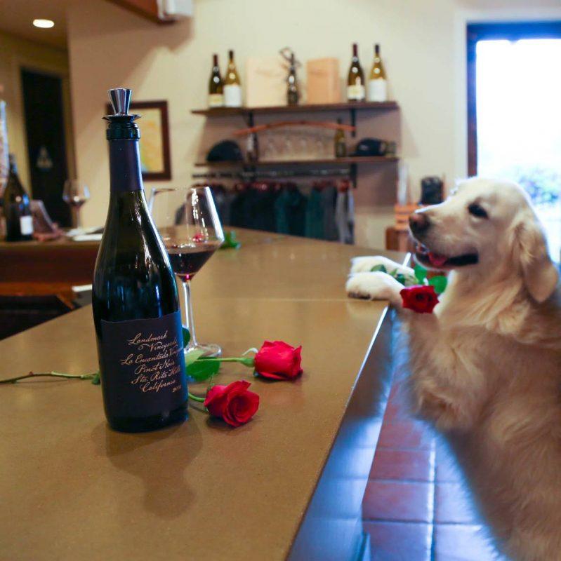 Mutt Lynch Winery Windsor