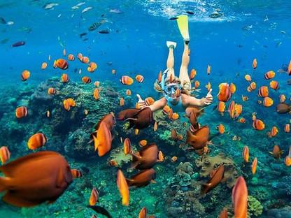 Snorkle & Dive