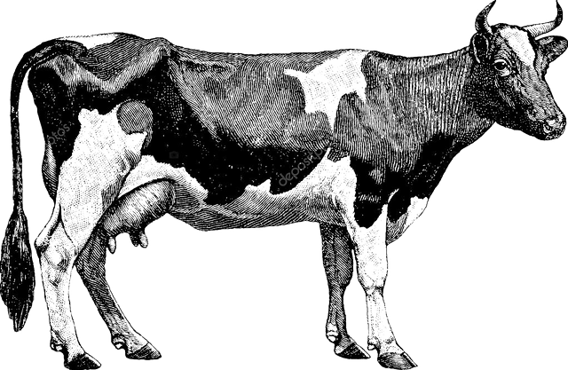 depositphotos_102234958-stock-photo-vintage-drawing-cow_edited.png