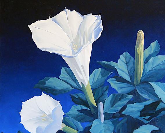 Sacred Night Bloom