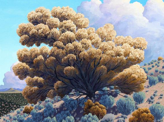 Fall Sage Bloom