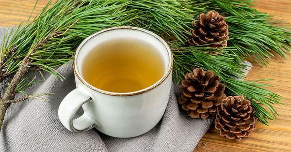 Pine Needle Tea.jpeg