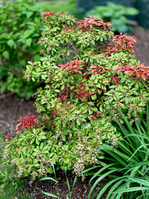 Red and Greens