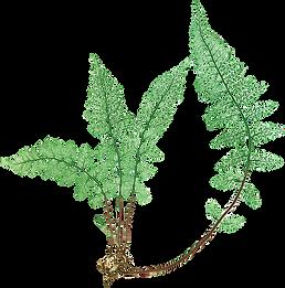 kisspng-canvas-graphic-arts-fern-leaf-wa