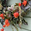 Thumbnail: Chinese Lantern Wreath
