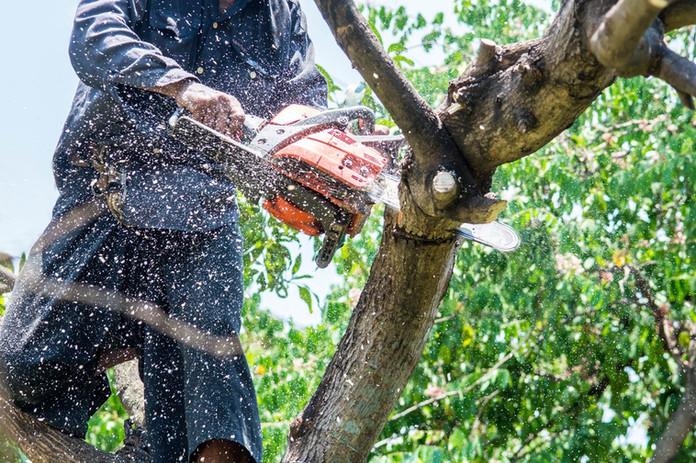 Sawdust tree trimming.jpg