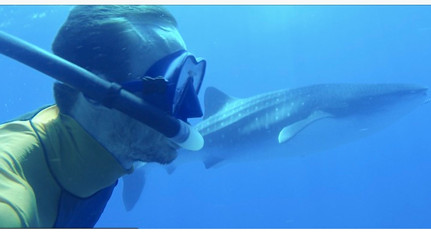 Seeing whale sharks in Tofo