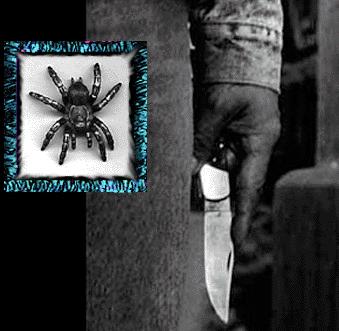 spiderlanguage.net