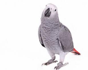 vogelarts papegaai Dierenkliniek IJburglaan Amsterdam
