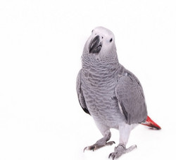 papegaai1_edited_edited
