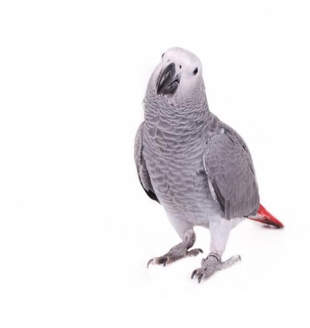 papegaai1_edited