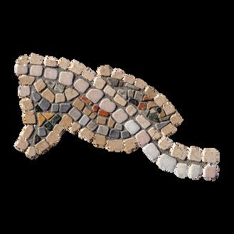Blue Tilapia / Jordan St. Peter's Fish (I)