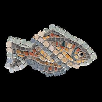 Mango Tilapia / Galilee St. Peter's Fish (D)