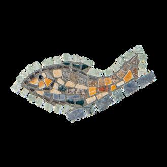 Blue Tilapia / Jordan St. Peter's Fish (G)