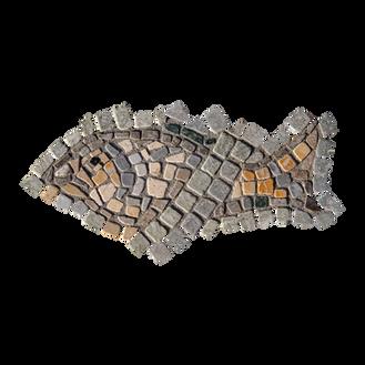 Blue Tilapia / Jordan St. Peter's Fish (J)