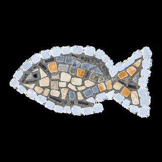 Blue Tilapia / Jordan St. Peter's Fish (H)