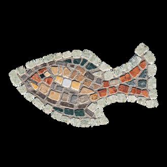 Mango Tilapia / Galilee St. Peter's Fish (K)