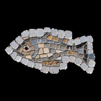 Blue Tilapia / Jordan St. Peter's Fish (D)