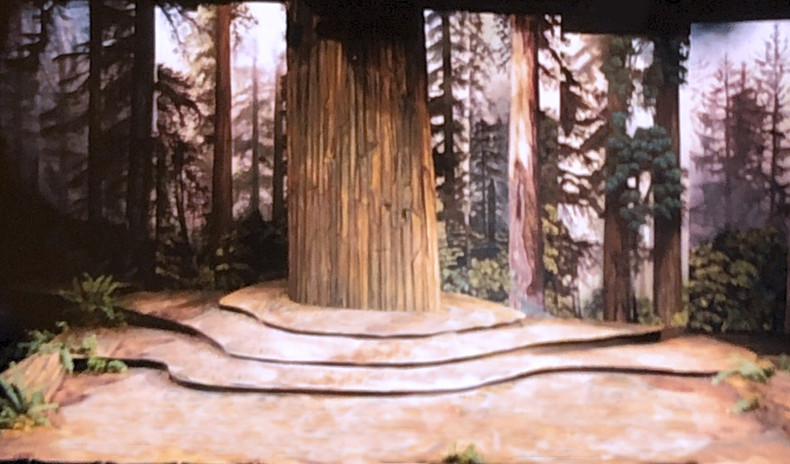 Old_growth_forest copy.jpg