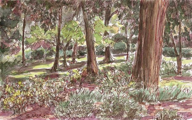 Georgia_Savannah_Trees at Forsyth Park.jpg