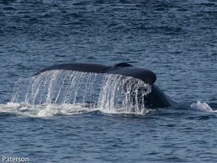 Whale Research Trip through BC Coastal Waters
