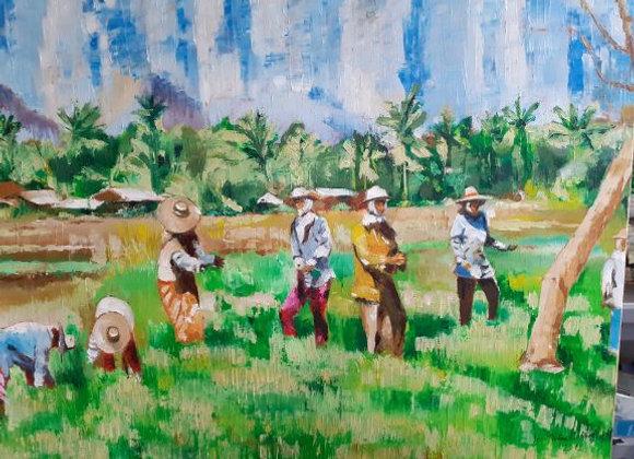 Femmes dans la rizière