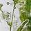 Thumbnail: La nature et l'homme 1 Monotype