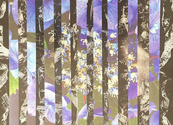 Hortensia Fleurs bleues 2