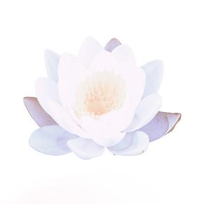 WARRIOR GODDESS Lotus Flower (1).png