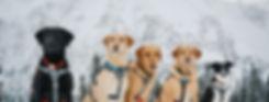FD-Rescue-Dogs-2-e1500924058812.jpg