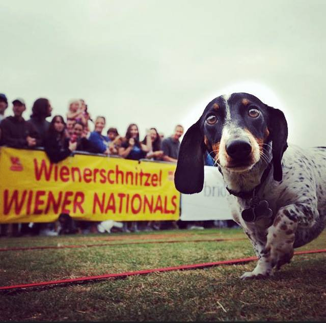Wienerschnitzel Wiener Nationals
