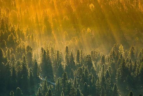 forest-4296305_1920-2.jpg