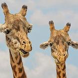 Africa Safari Adventure