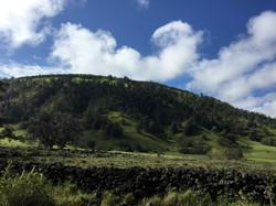 Hawaiian dry forests