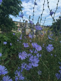 Urban pollination ecology