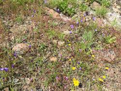 Coexistence in flowering communities
