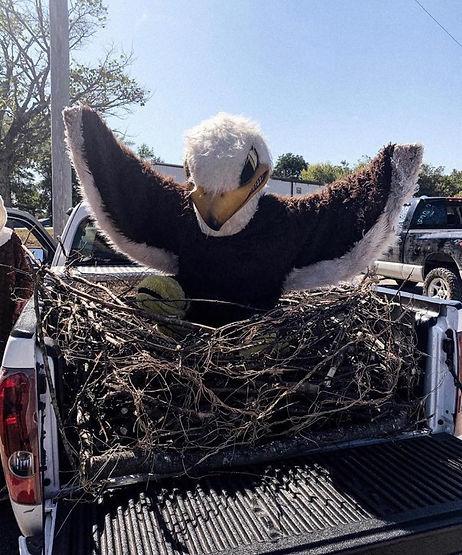 Eagle in Nest.jpg