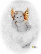newborn baby girl poses angel wings, bab