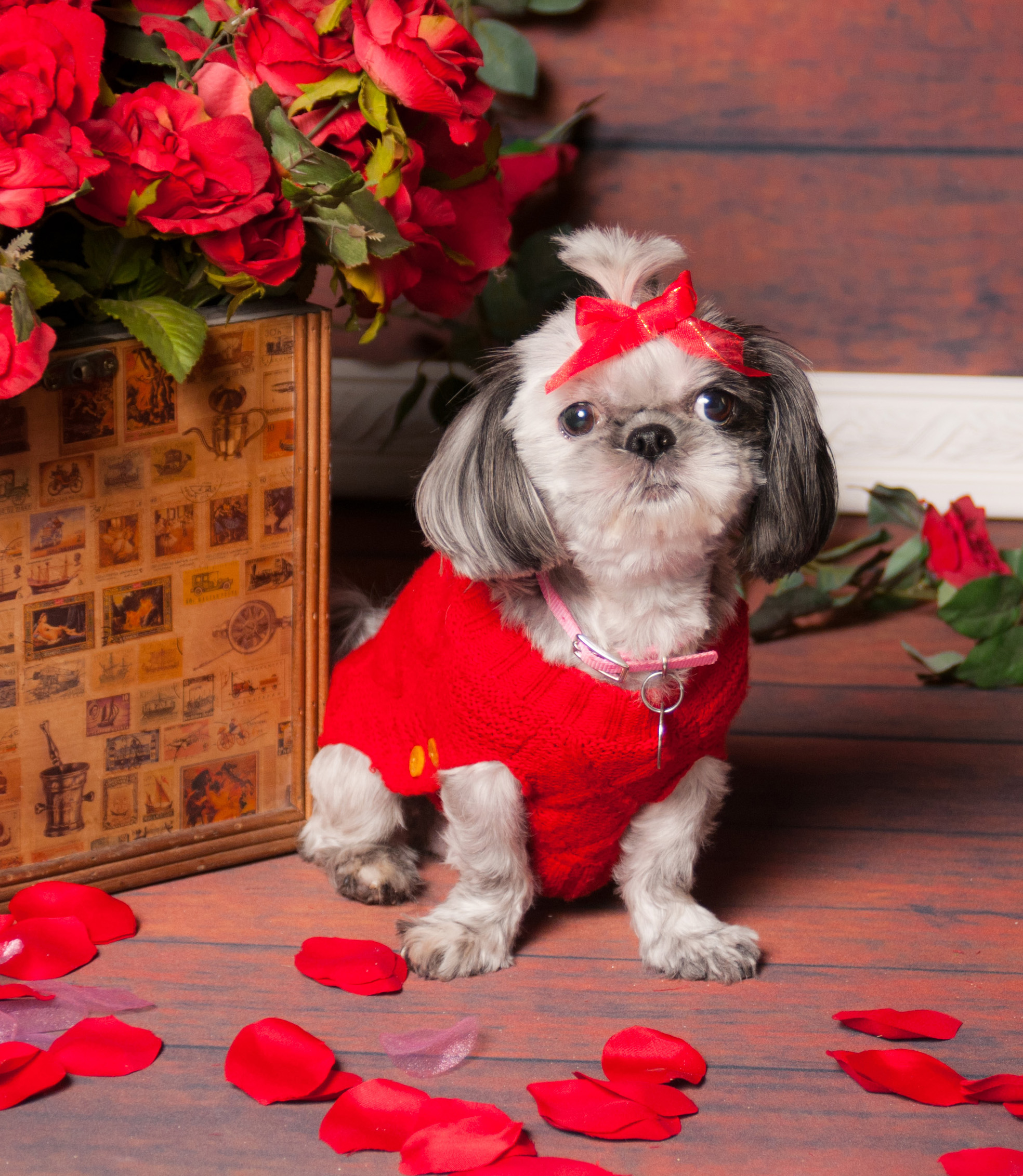 Tiffy Pet valentine Photos On-Site Photo