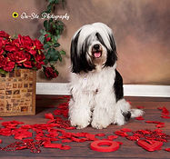 Valentine Holiday Pet Photos On-Site Pho