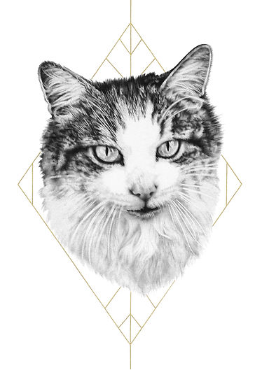 pet portrait, cat art, biro drawing, hyperrealistic