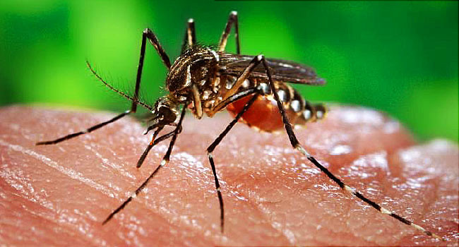 Stop Mosquitoes from biting you !