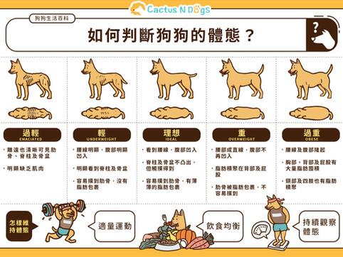一圖看清狗狗體態何謂理想、過輕或過重