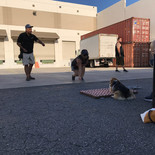 puppy obedience