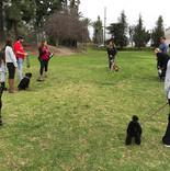 group dog training