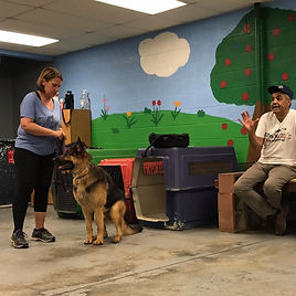 Falco Dog training Mentorship