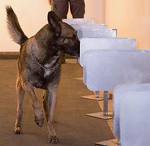 Dog Detection training