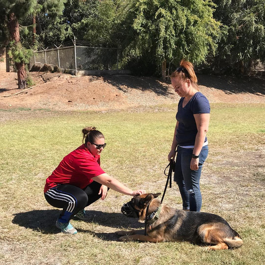 Brea dog training
